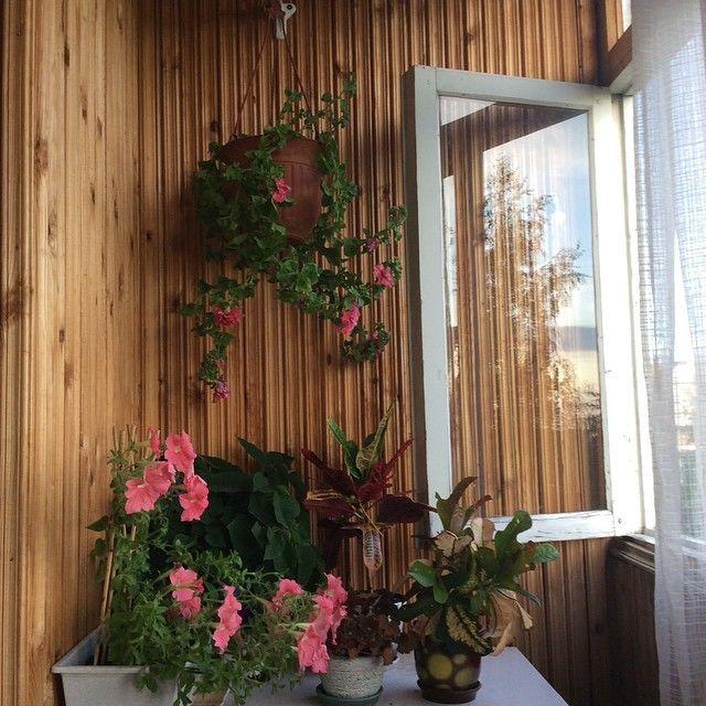 Цветы на балконе: 20 фото.