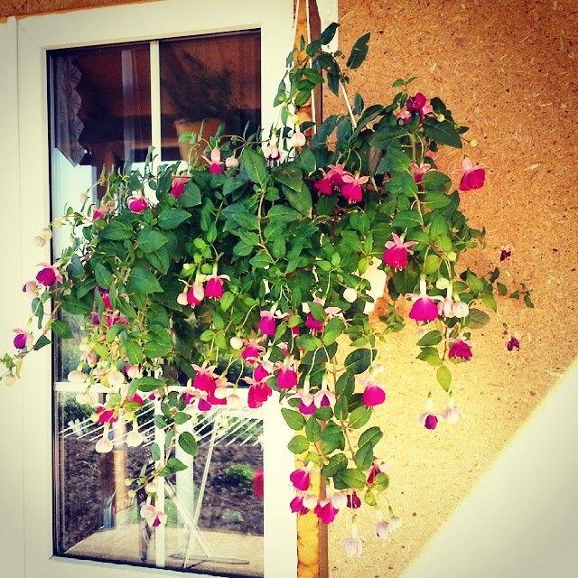 Цветы на умершего 82