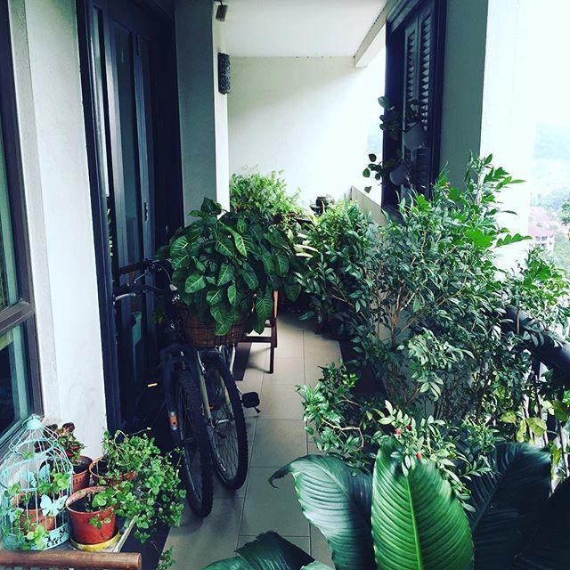 Озеленение лоджии: 15 фото.