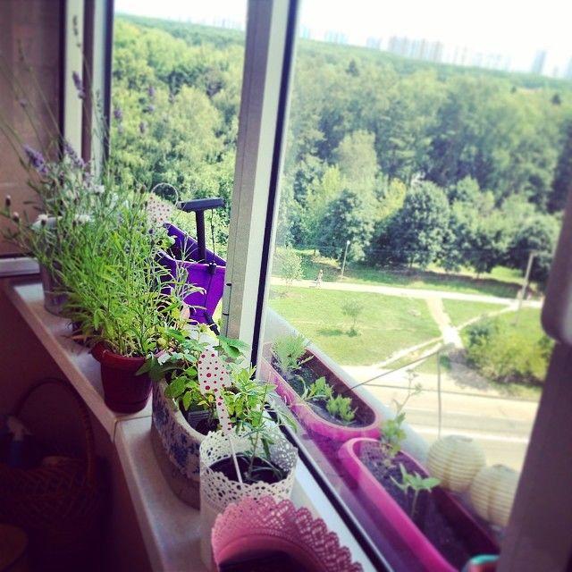 Зимний сад на балконе: фото, видео.