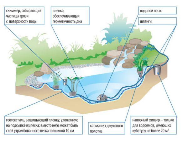 Строение пруда в разрезе