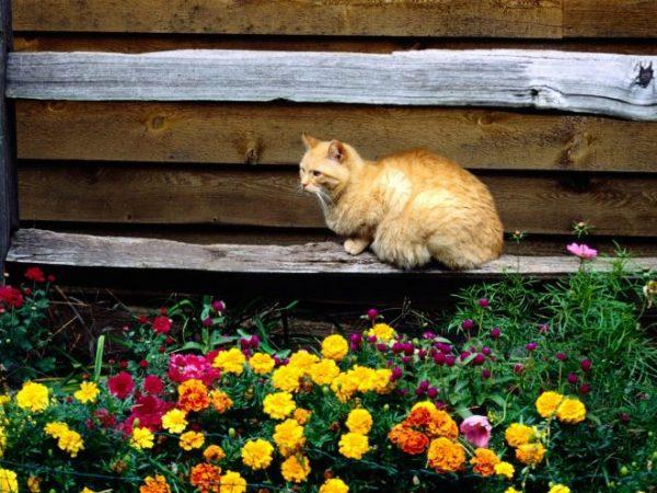 Кот у клумбы