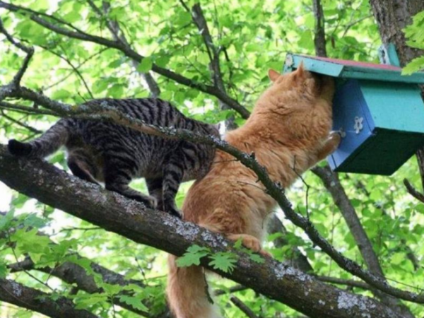 Недоступно котам