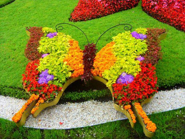 Миксбордер бабочка