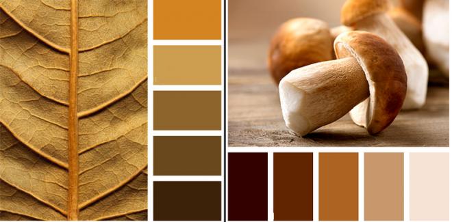 Сочетание коричневого цвета в интерьере