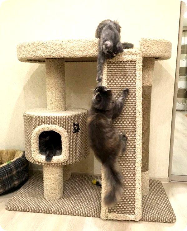 Как сделать точилку для кошек фото 487
