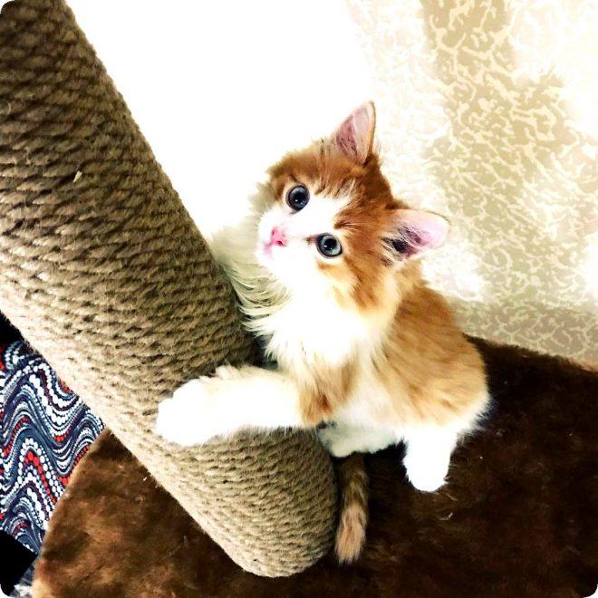 Точилку для кошек своими руками