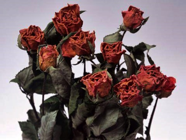 Сушим розы правильно, без потери цвета и формы
