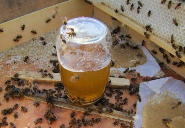 Канди и сироп для пчел