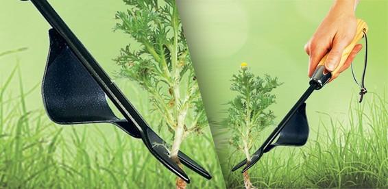 Прополка и удаление сорняков