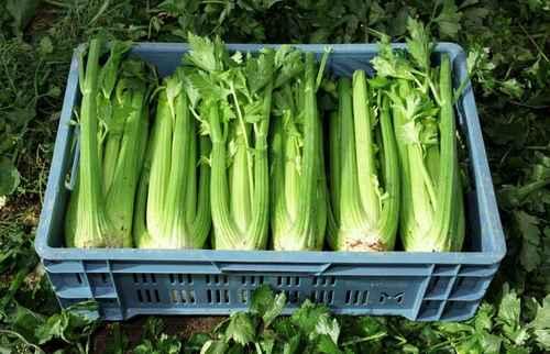 Удачный сбор урожая