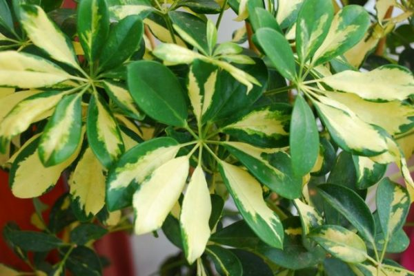 Узор на листьях