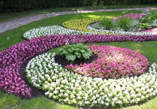 Цветник из овощных культур