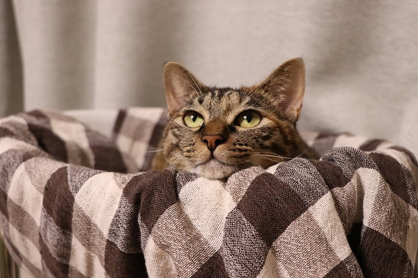 Как сделать лежанку для кошки своими руками (55 фото): лежак из старого свитера, на батарее, мастер класс, как сшить, как делаться кроватка