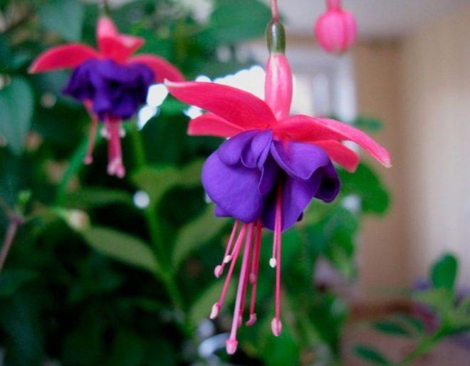 Комнатные цветы названия и уход