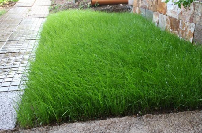 Посадка газонной травы своими руками