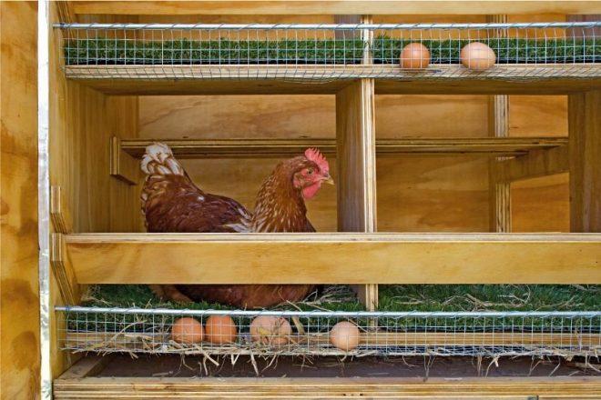 Куриные гнезда — как сделать своими руками с яйцесборником