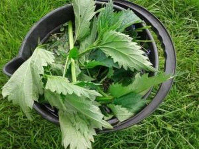 Особенности выращивания цветной капусты