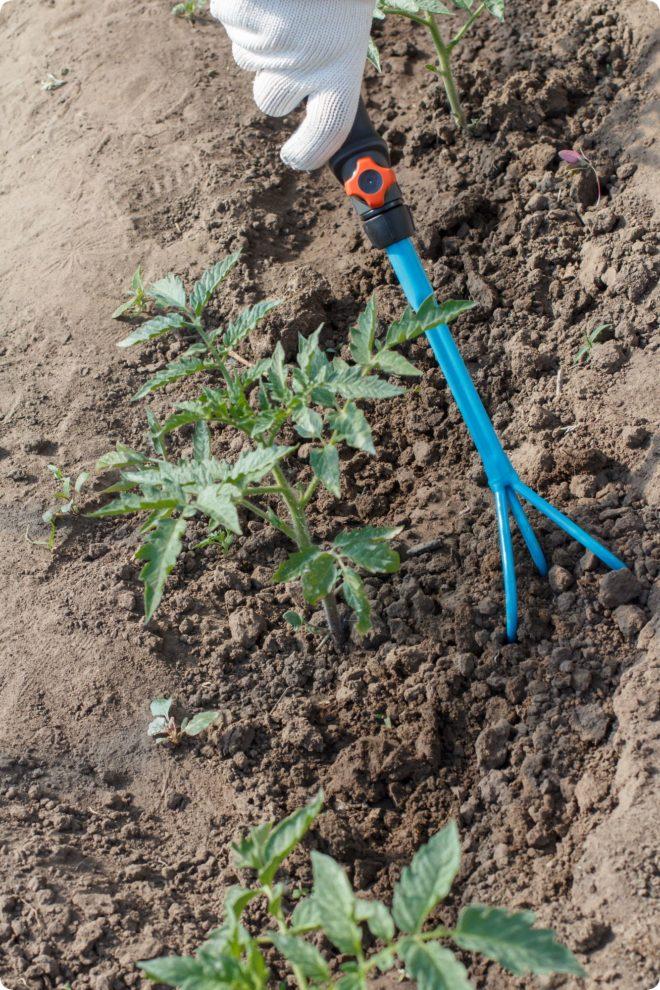 Уход за томатами после посадки