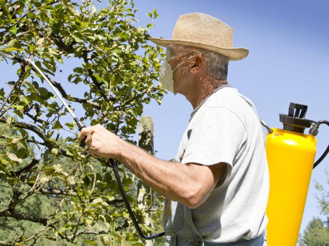 Как избавиться от тли на дереве