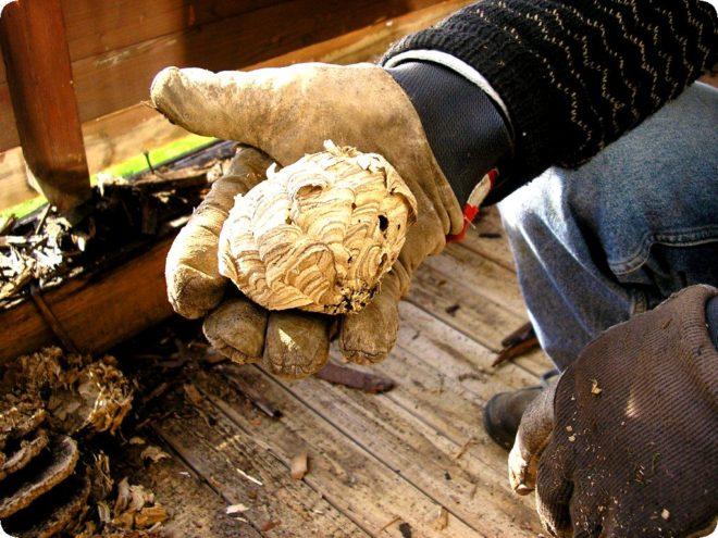 Как избавиться от ос под крышей