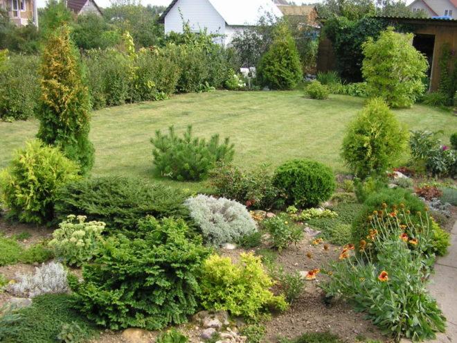 Самая красивая посадка кустарников на даче