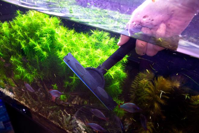 Уход за аквариумом и рыбками с картинками
