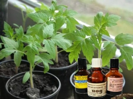 Можно ли использовать йод в саду и огороде