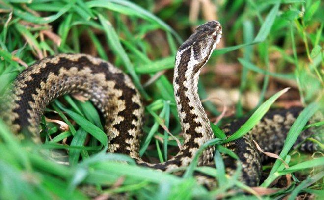 Избавляемся от змей на участке раз и навсегда