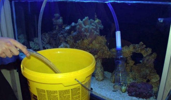 Чистим аквариум с рыбками своими руками правильно