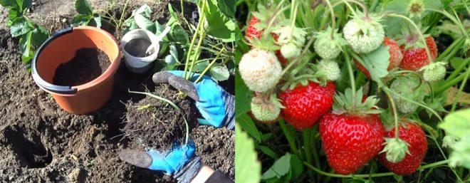 Что посадить на грядку после чеснока летом в июле-августе