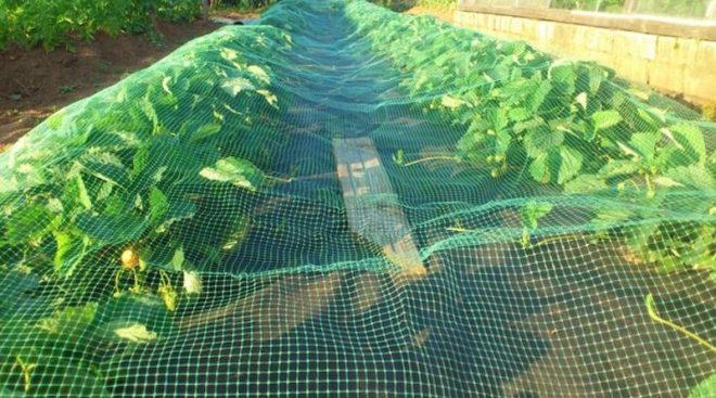 Х эффективных способов отпугивания птиц от урожая - Дом
