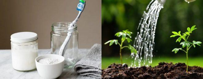 Зубная паста - находка для огородника