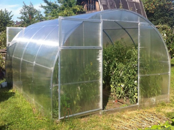 Когда прекращают поливать помидоры в теплице - советы и хитрости