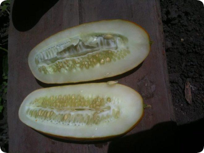 Заготовка семян огурцов в домашних условиях