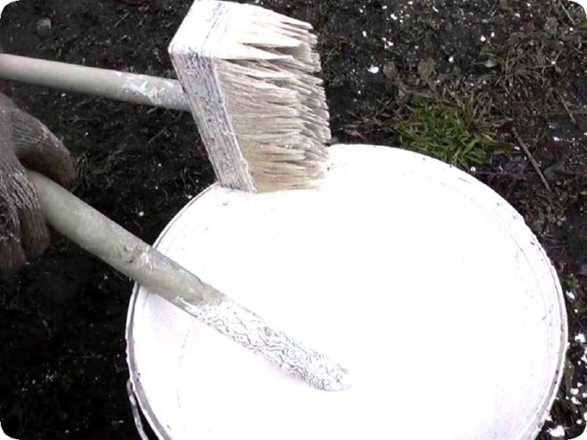Как и чем обрабатывают теплицу от фитофторы и гнили