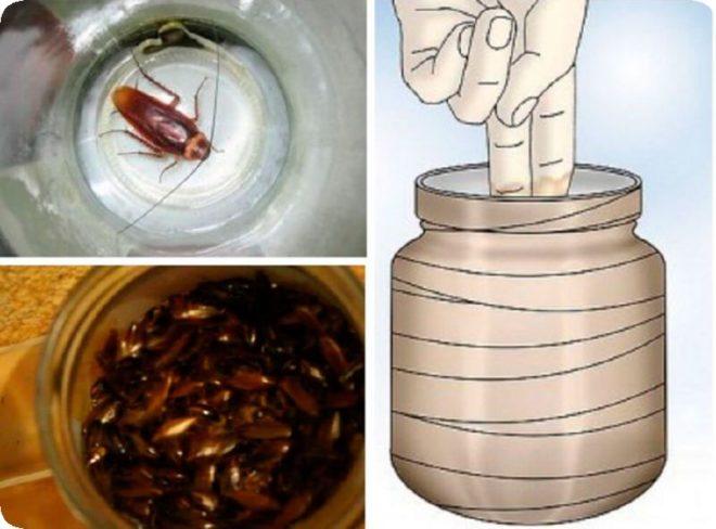 Изготавливаем простые и эффективные ловушки для тараканов самостоятельно