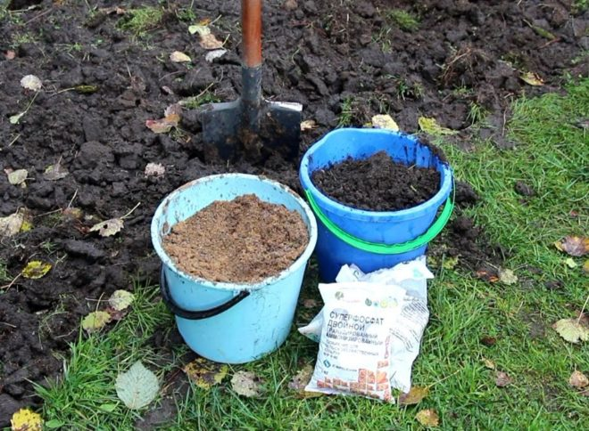 Выращивание персика из косточки дома