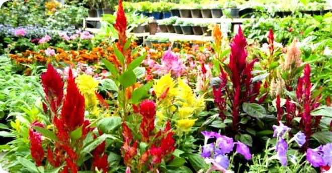 Цветы для осенней посадки в грунт