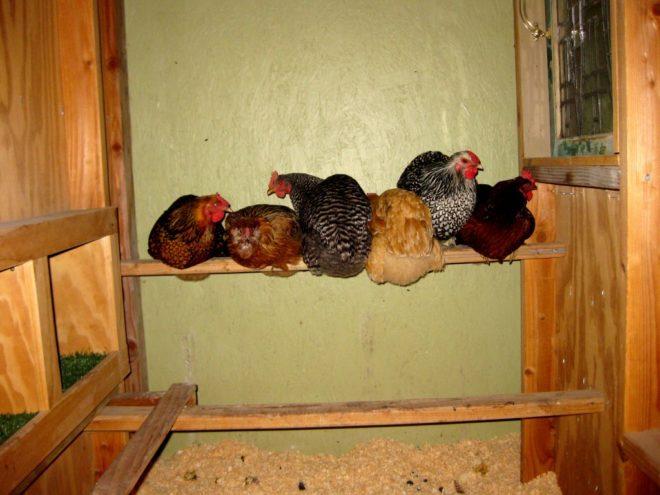 Зимний вариант курятника на 10 кур своими руками