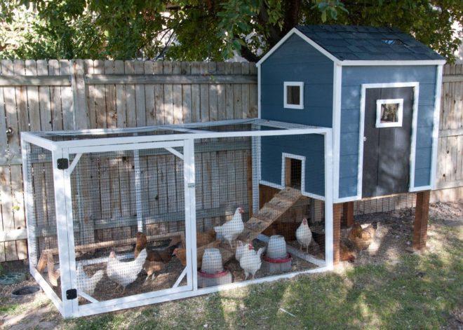 Как построить зимний курятник на 50 кур
