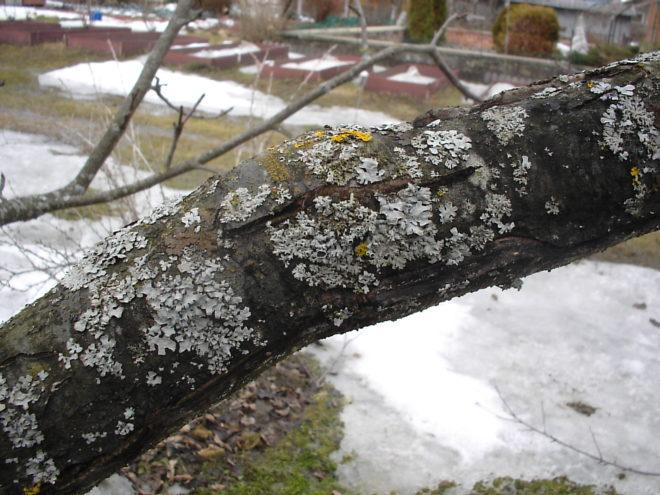 Осенняя обработка сада мочевиной - Дача