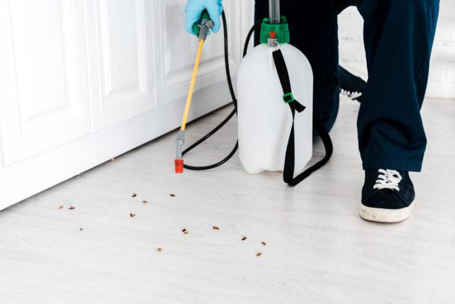 Как травить тараканов борной кислотой и яйцом