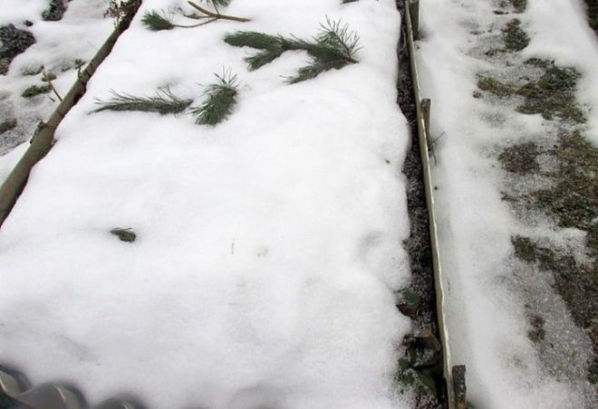 Что посадить на рассаду в декабре и январе
