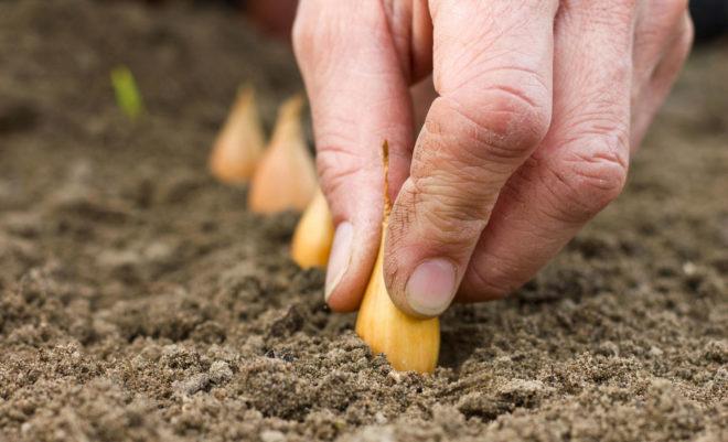 Когда сажать лук в 2020 году - удачные и неудачные дни