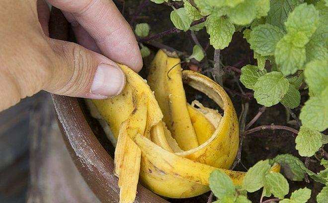 Почему лучше не выбрасывать банановую кожуру - применение в хозяйстве