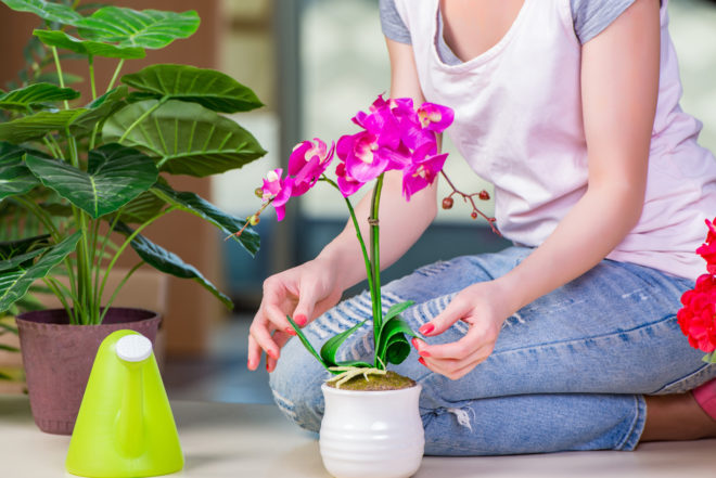 Когда пересаживать комнатные растения в январе 2020 - самые благоприятные дни