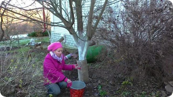 Как спасти сад от морозов - полезные советы