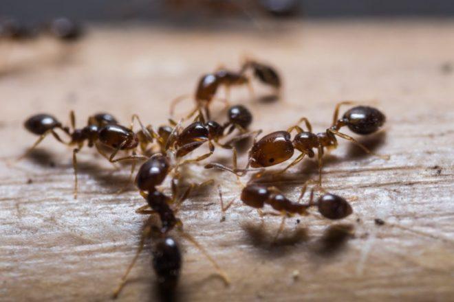 Как вывести муравьев из бани раз и навсегда