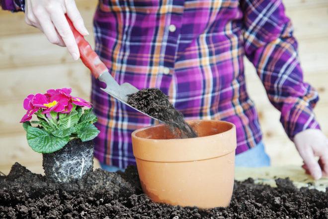 Когда пересаживать комнатные растения в марте 2020 — самые благоприятные дни